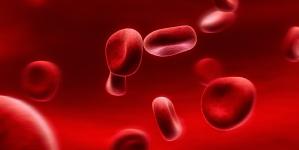 Blutwertelexikon